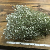 Dried Flowers - Baby's Breath Bundle - Gypsophila - DIY