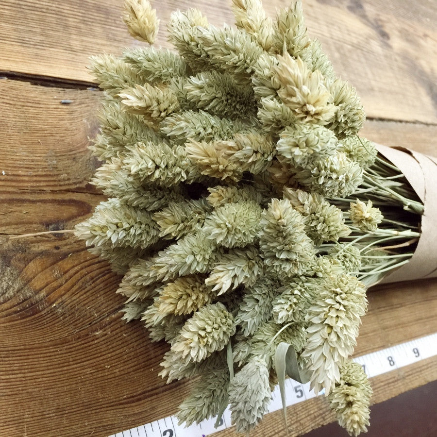 Phalaris - DIY Dried Flower Bundle