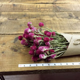 Pink Globe Amaranth - Gomphrena - DIY Dried Flower Bundle