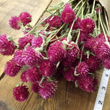 Dried Flowers - Pink Globe Amaranth Bundle - Gomphrena - DIY