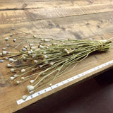 Dried Flower Bundle - Poppy Pods - DIY