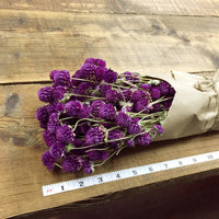 Purple Globe Amaranth - Gomphrena - DIY Dried Flower Bundle