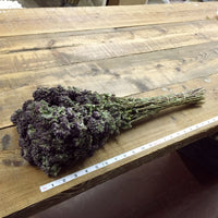 Dried Flowers - Purple Oregano Bundle - DIY