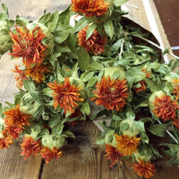 Dried Flowers - Orange Safflower Bundle - DIY