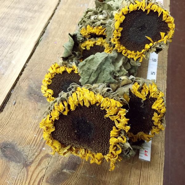 Sunflowers Diy Dried Flower Bundle Dried Flowers Forever