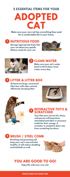 5 Essential Items for Your Adopted Cat