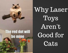 Why Laser Toys Aren't Good for Cats