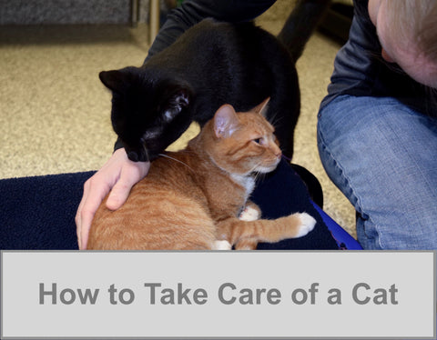 How to Take Care of a Cat