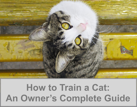 How to Train a Cat