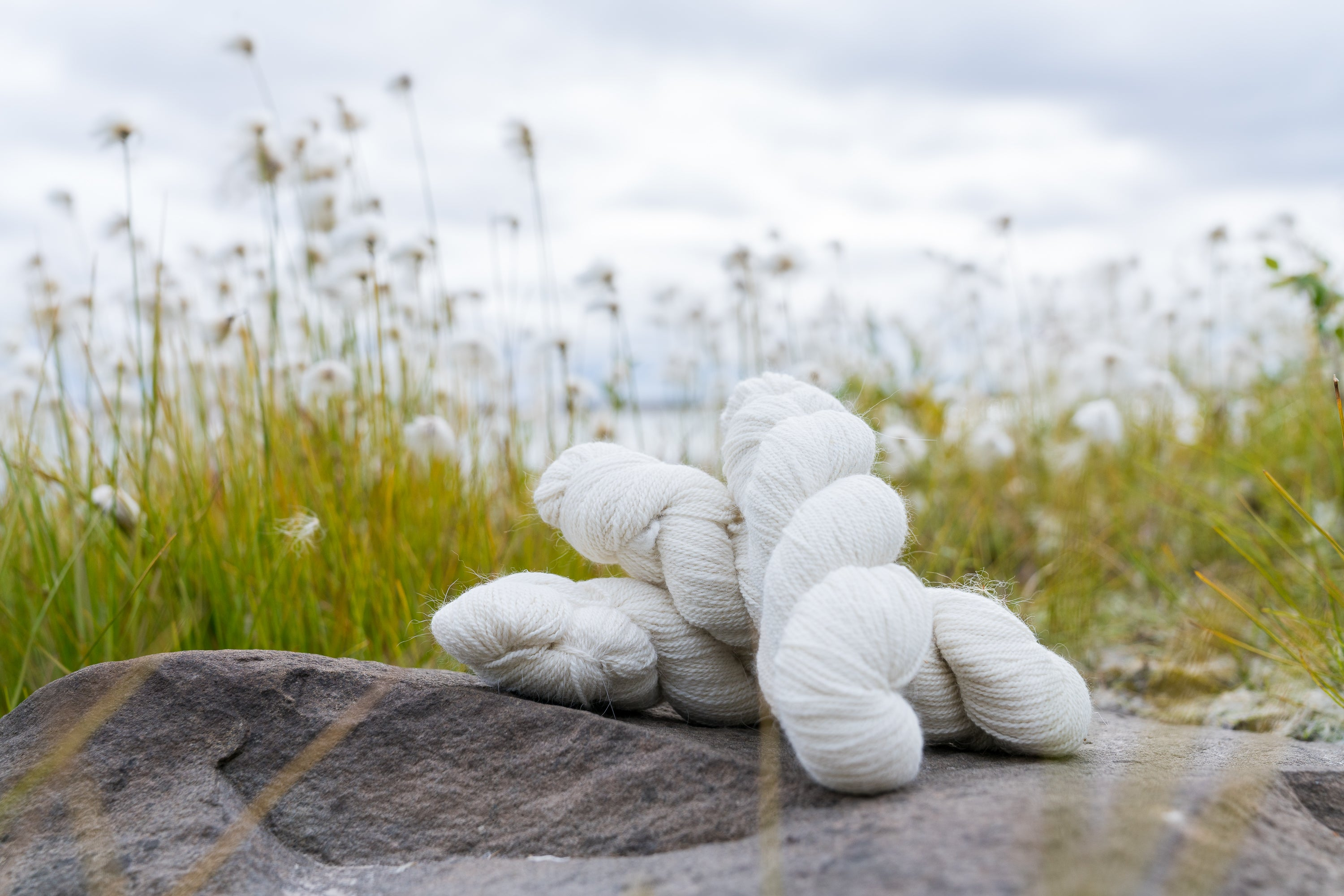 30% Arctic Fox: 60% Superfine Merino: 10% Silk Yarn among the Arctic Cotton grass