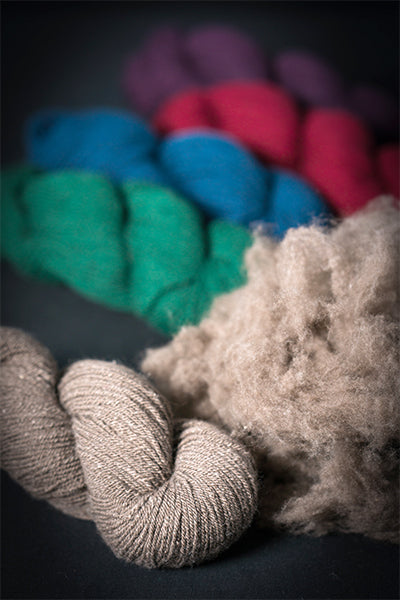 Photo of 100% Nunavut Qiviut Yarn and prime dehaired qiviut fiber. (Credit: DNV Photo)