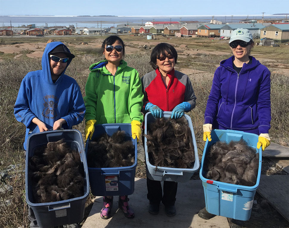 Photo of summer workers and qiviut (Credit: Nunavut Qiviut)