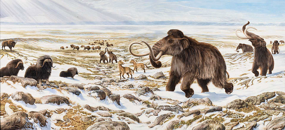 Beringia Photo of Muskox and Wooly Mammoth