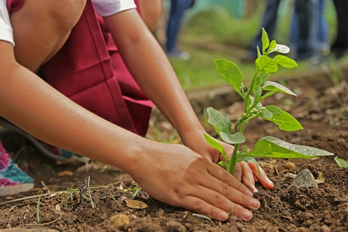 2,200 trees planted thanks to you!