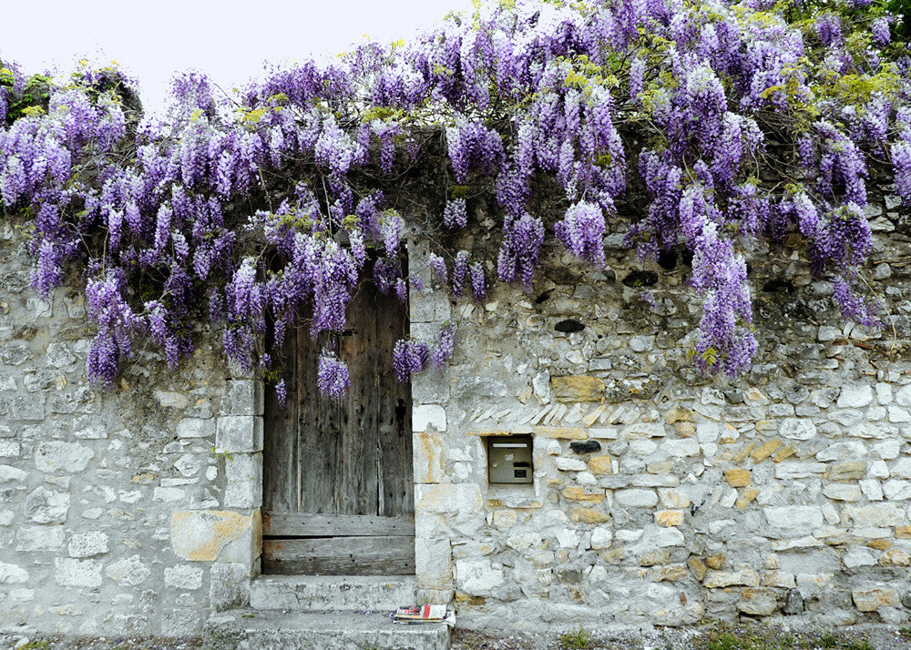 .1607 Pack of 5 Greeting Cards  Wisteria Wall Viviers France