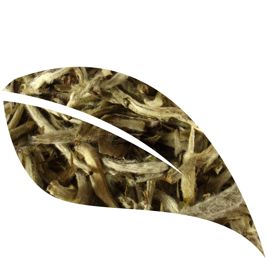 Silver Needle, White Tea