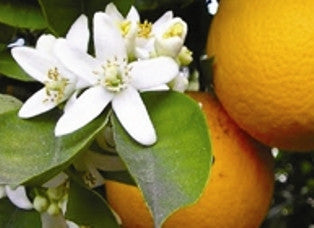 Neroli- Organically Cultivated