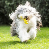Gnawbbers Stretchy Coil Yellow Float Dog Toy