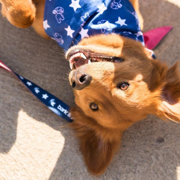 Load image into Gallery viewer, Patriotic Pup Bandana