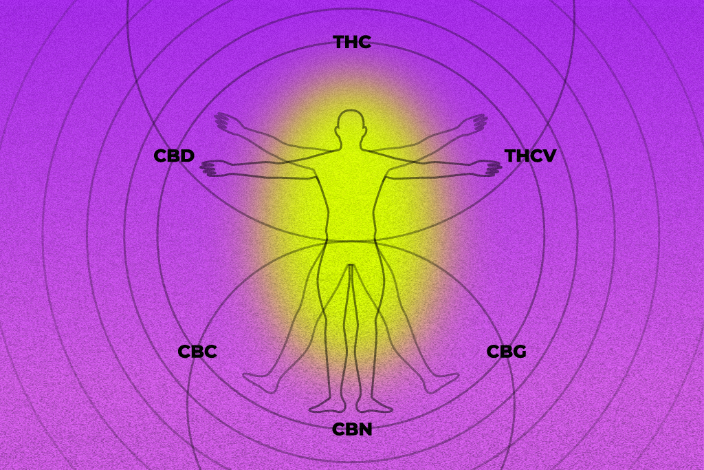 What You Need to Know About Different Cannabinoids