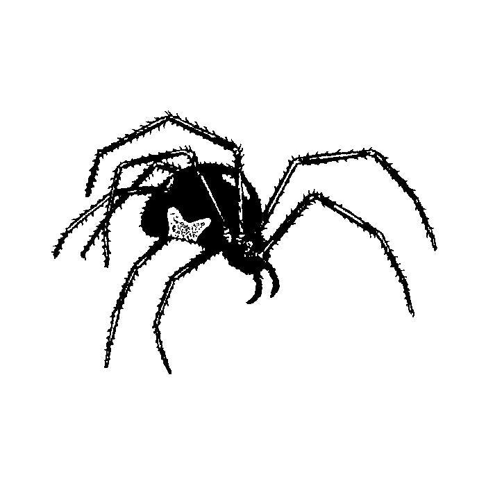 Black Widow Spider 1709D