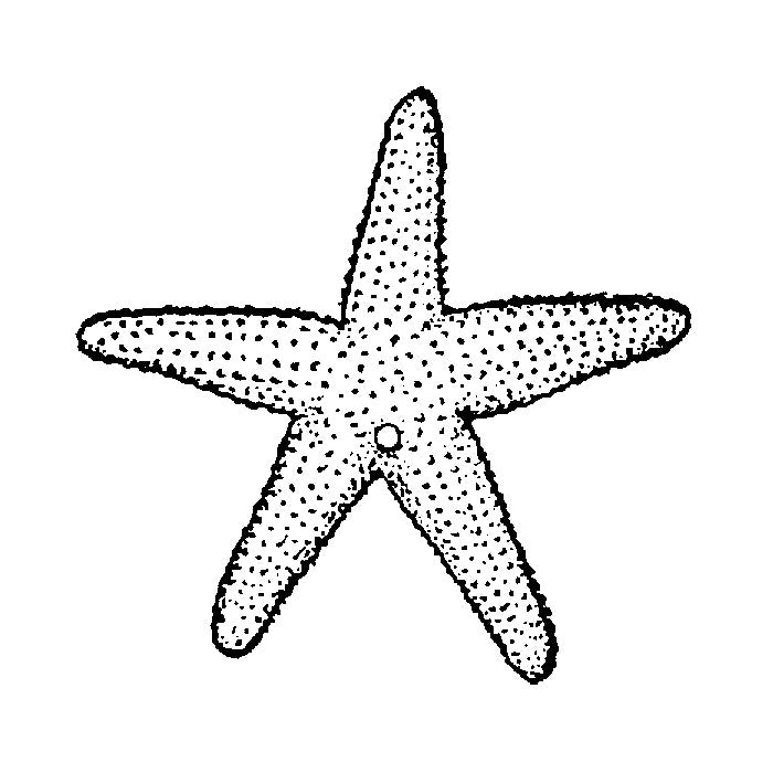 Small Starfish 1615D