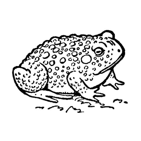 Small Toad 1651D