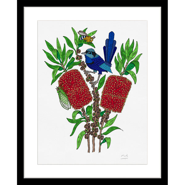 Limited Edition Botanic Art Print: Fairy Wren