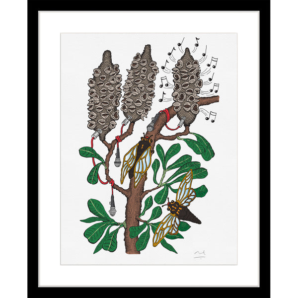 Limited Edition Botanic Art Print: Cicadas