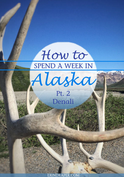 How to Spend a Great Week In Alaska - Days 2-3: Stunning Denali National Park