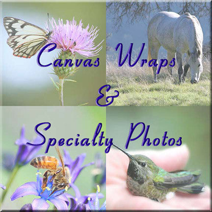 Canvas Gallery Wraps & Specialty Photos