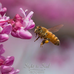 Flying honey bee photo