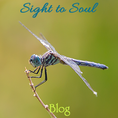 Sight to Soul Photography Blog