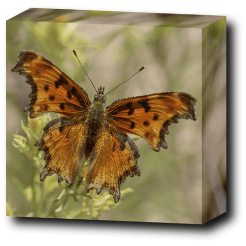 Brown Butterfly Canvas Wall Art