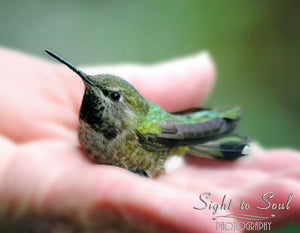 Hummingbird in Hand Photo, Bird Lover Gifts