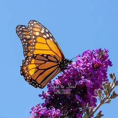 Monarch Butterfly Photography, Nature Wall Décor, Fine Art Print
