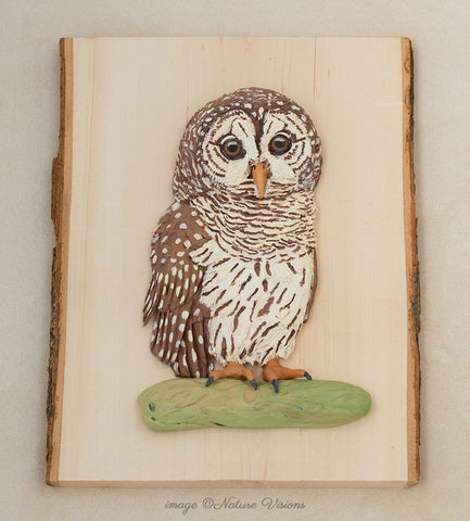Barred Owl Art
