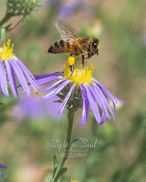 honey bee photo, nature wall art