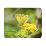 yellow butterfly photo mouse pad
