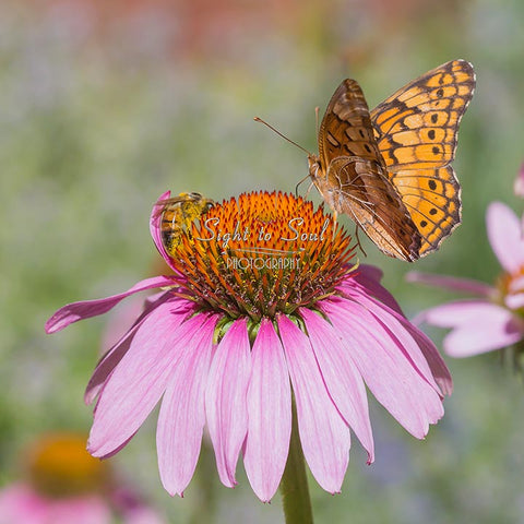 Bee and Butterfly Print, Nature Wall Art, Fine Art Photo