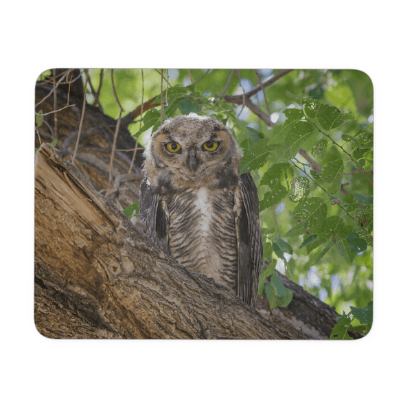 baby Great Horned Owl photo mouse pad