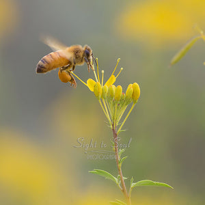 Flying Honey Bee Photography, Nature Wall Art, Fine Art Photo