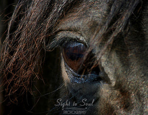 Black Horse Eye Art, equine photography, horse lover gifts