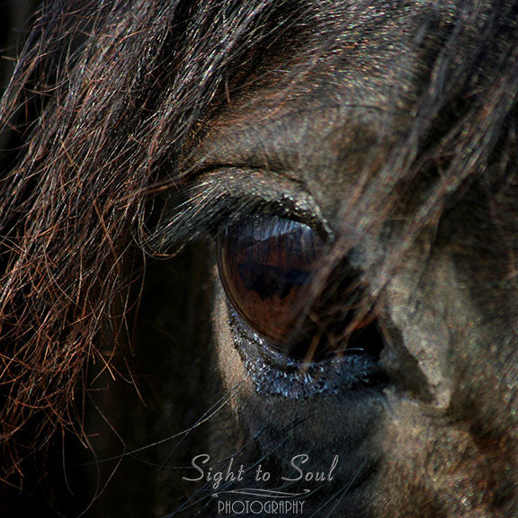 Black horse photography, horse lover gifts, fine art print
