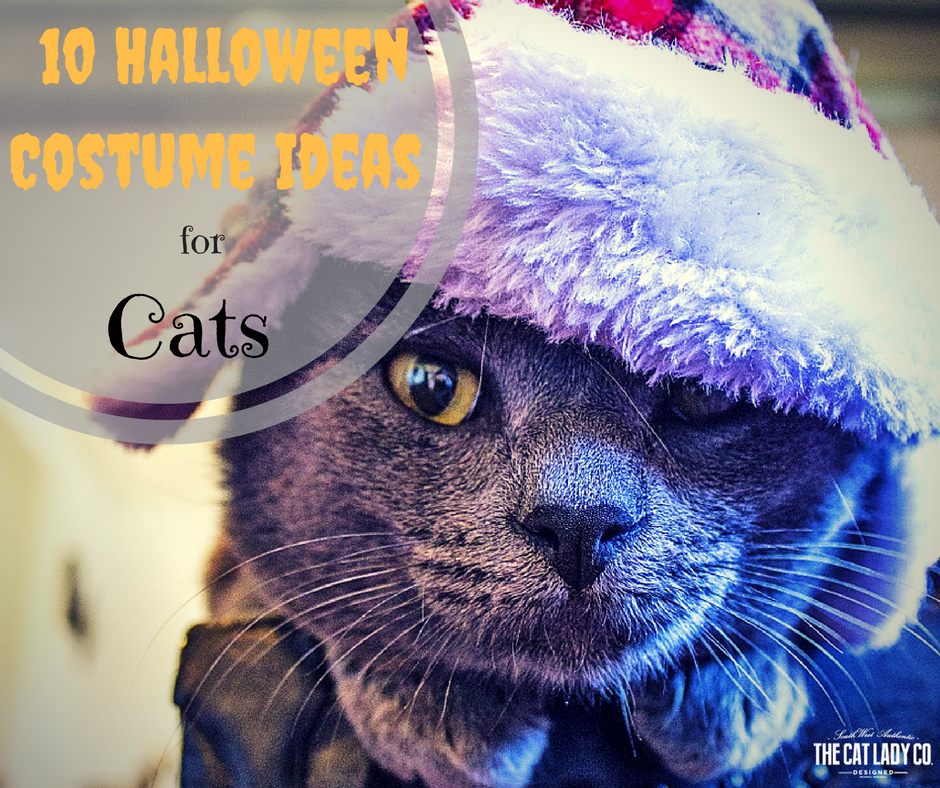10 Halloween Costume Ideas For Cats