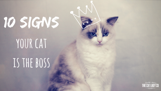 10 Signs Your Cat Is The Boss