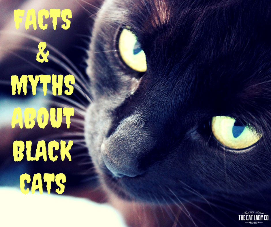 Facts & Myths About Black Cats