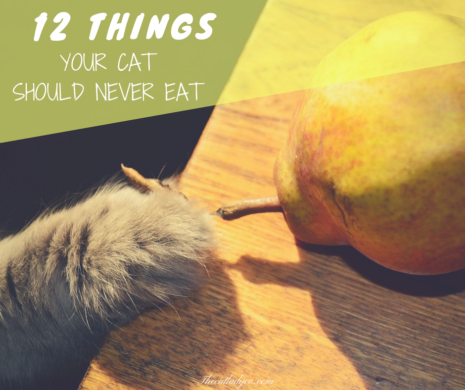 12 Things Your Cat Should Never Eat