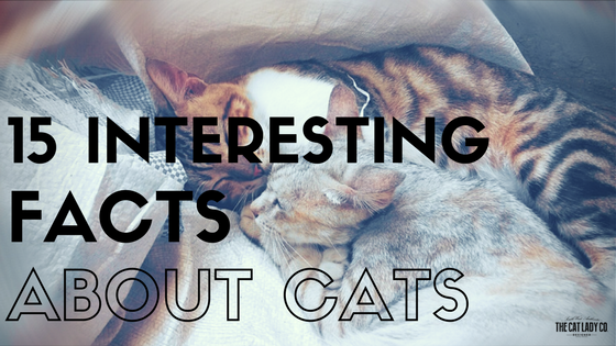 15 Interesting Facts About Cats