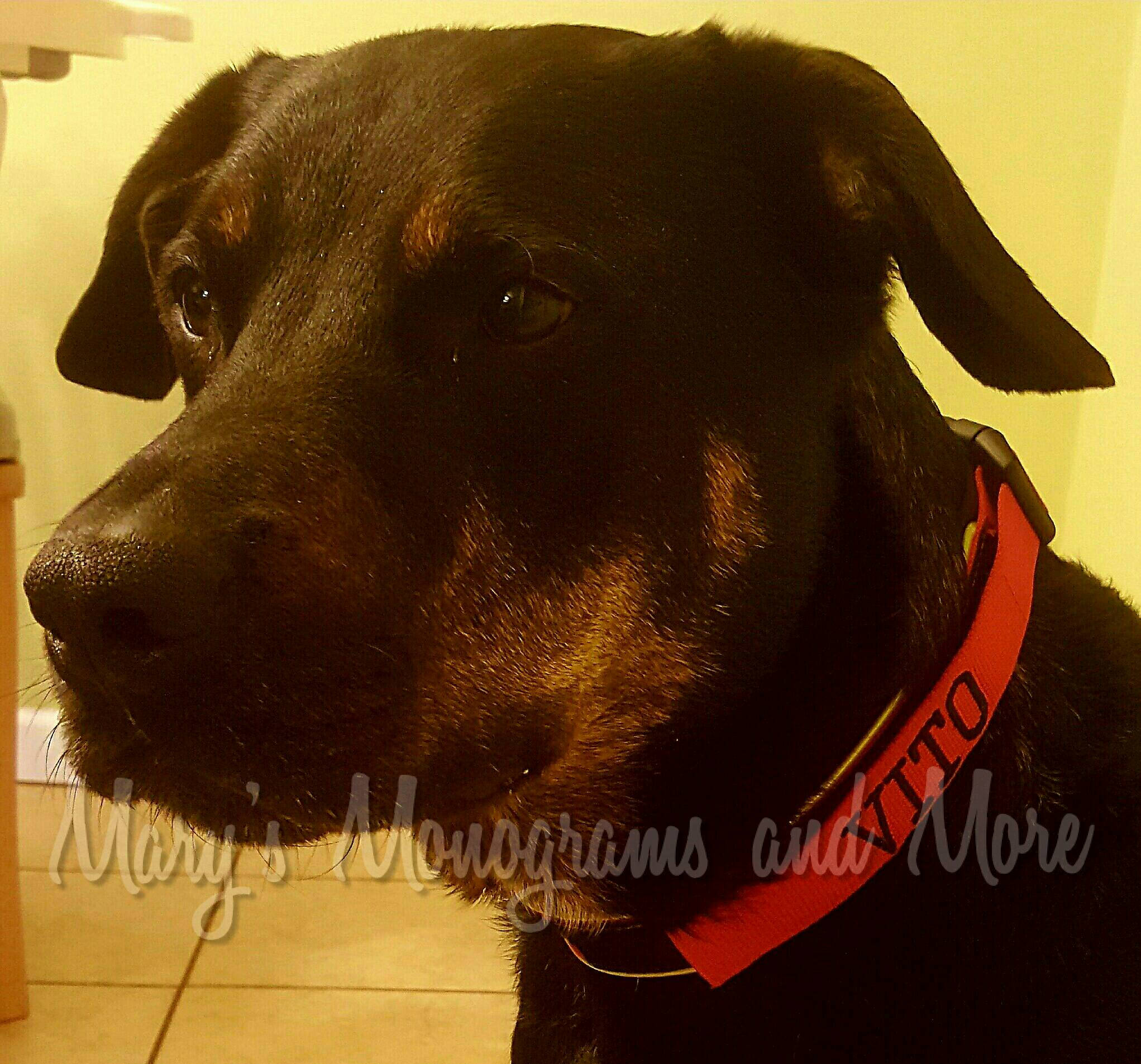 Personalized ID Dog Collar